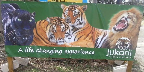 Activities banners-06